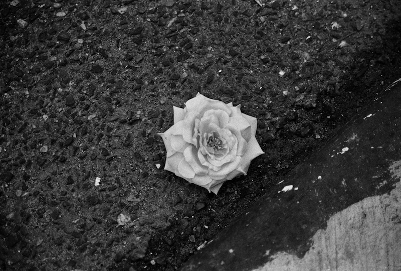 Leanise's Rose