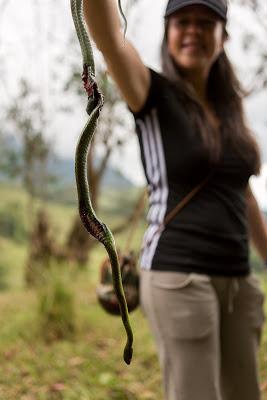 Nidia W Snake
