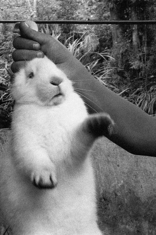 Erik-conejo